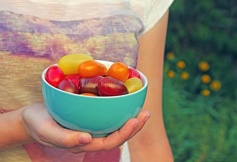 Bowl with multi colored tomatoes, held by a young woman stock photo