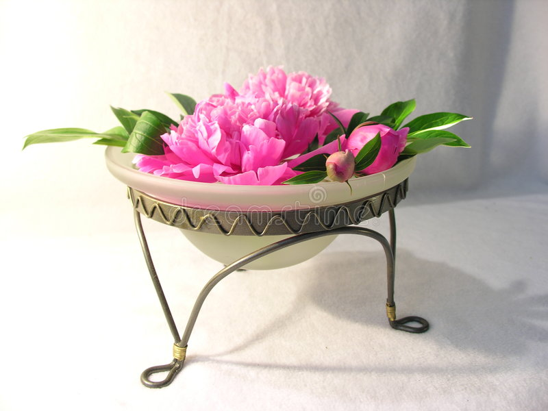 A Bowl of Peonies royalty free stock photos