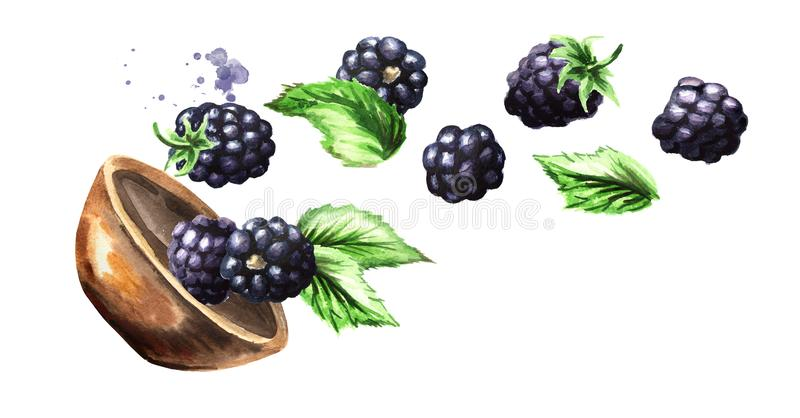 Bowl with ripe blackberry. Watercolor hand drawn horizontal illustration, isolated on white background. Bowl with ripe blackberry. Watercolor hand drawn vector illustration