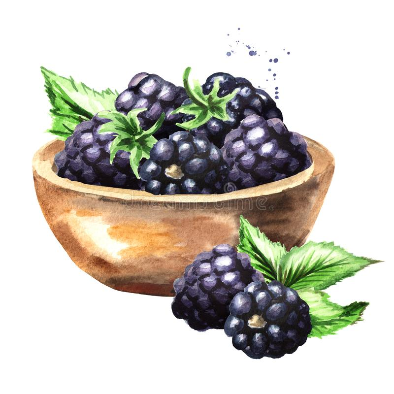 Bowl with ripe blackberry. Watercolor hand drawn illustration, isolated on white background. royalty free illustration