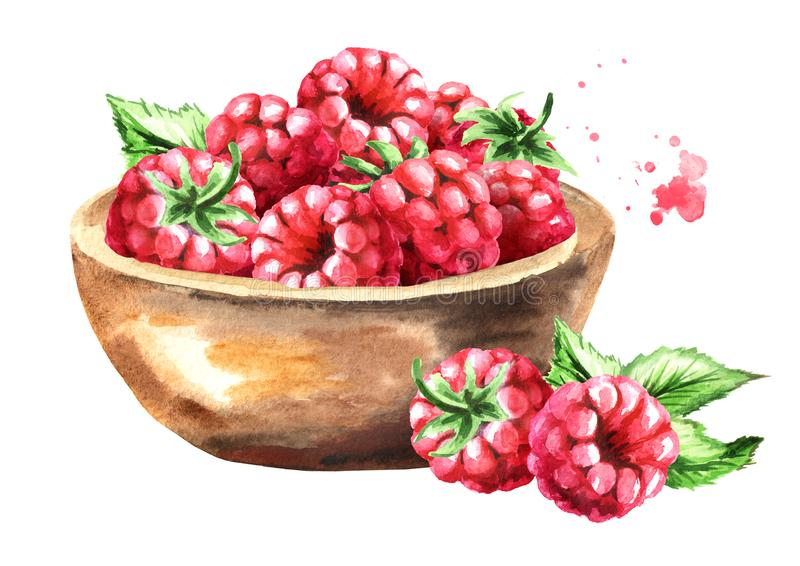 Bowl with ripe raspberry. Watercolor hand drawn illustration, isolated on white background royalty free illustration