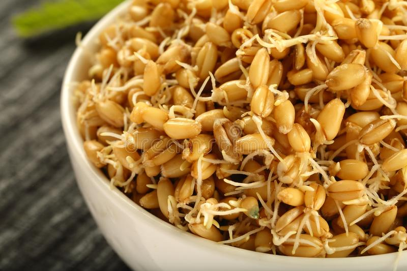 Bowl of Sprouted wheat beans macro imaging. Macro photography - bowl of sprouted wheat .fresh food concepts stock photo