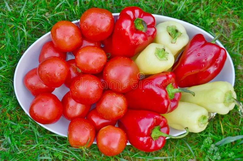 Bowl of vegetable, southern Bohemia royalty free stock photography
