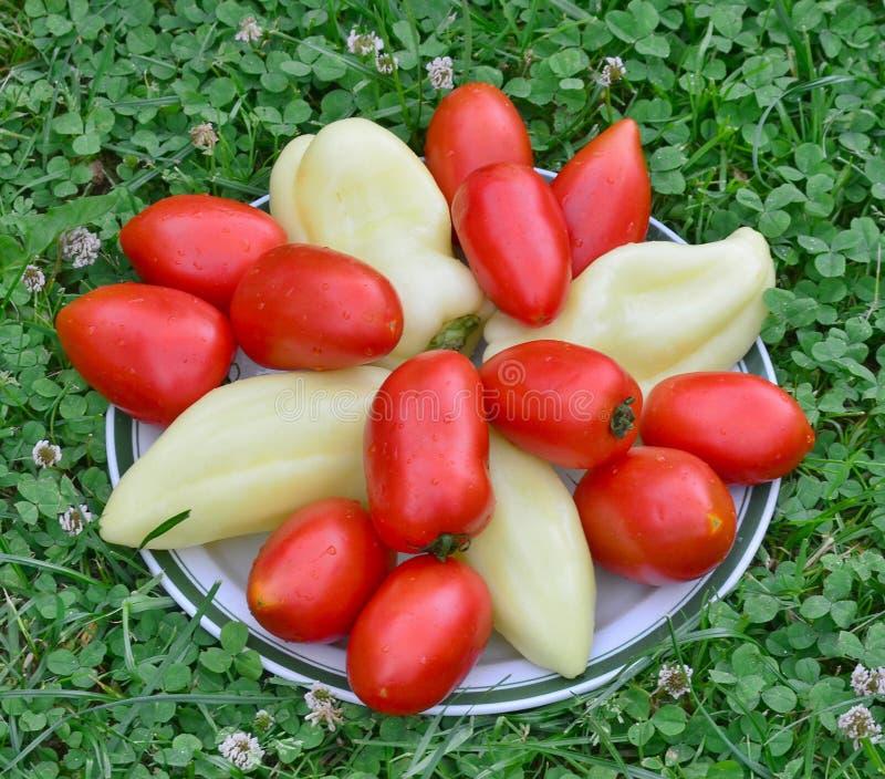 Bowl of vegetable, southern Bohemia stock photos