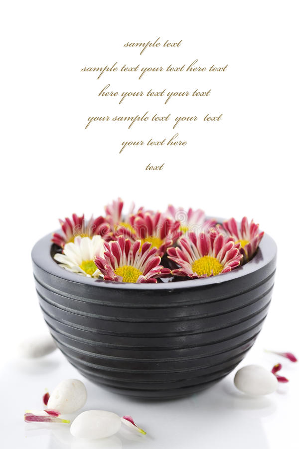 Bowl of water and flowers-SPA concept royalty free stock photos