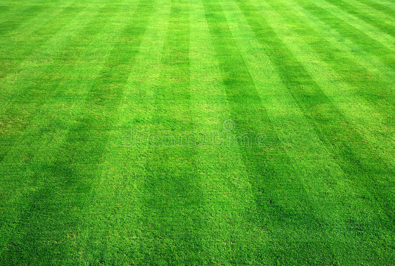 bowla gräsgreen arkivbild