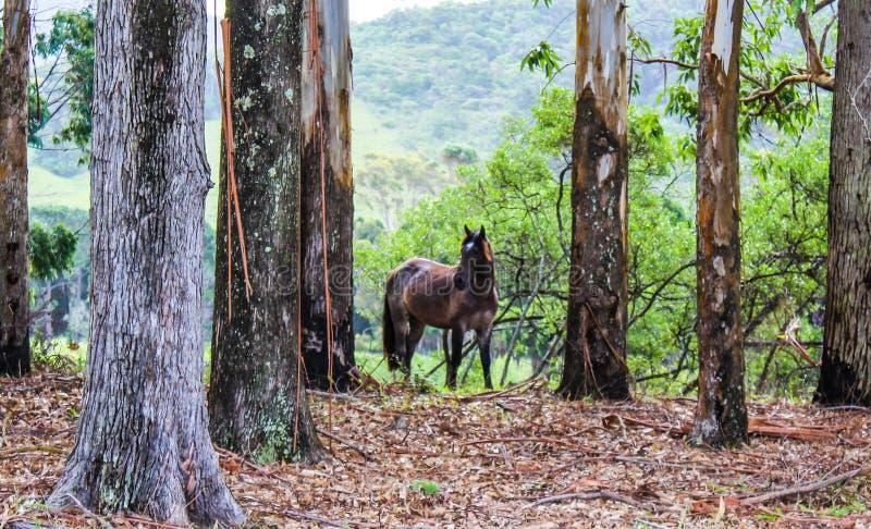 Bownpaard in de bomen stock fotografie