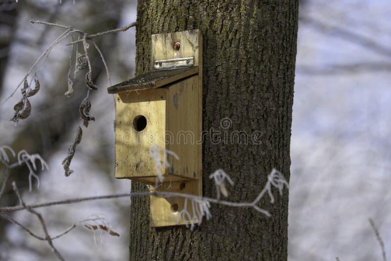Box for birds in tree royalty free stock photos