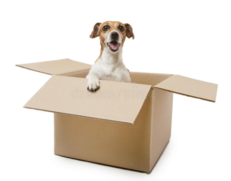 Download Box dog stock photo. Image of canine, cardboard, puppy - 39500098