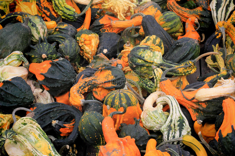 Box of Gourds royalty free stock photo