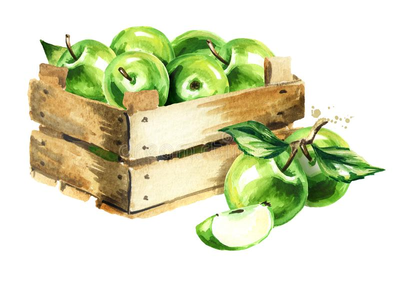 Box with green apples. Watercolor Hand drawn illustration, isolated on white background. vector illustration