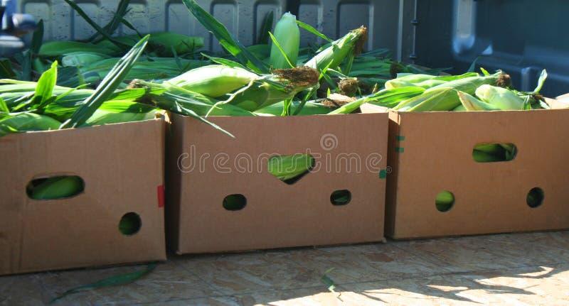 Box mit gelben Maisbeeren zum Verkauf auf dem Bauernmarkt lizenzfreie stockfotografie