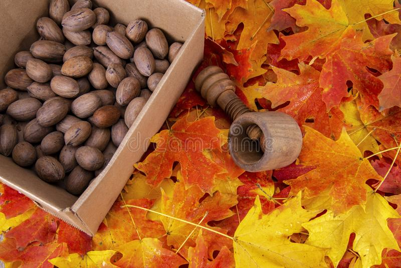 A box of pecans , antique wooden nut cracker royalty free stock image
