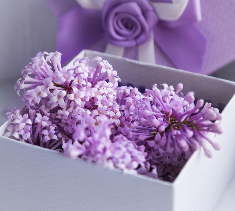 Gift design in lilac color. Box with ribbon and blooming lilac. stock photography