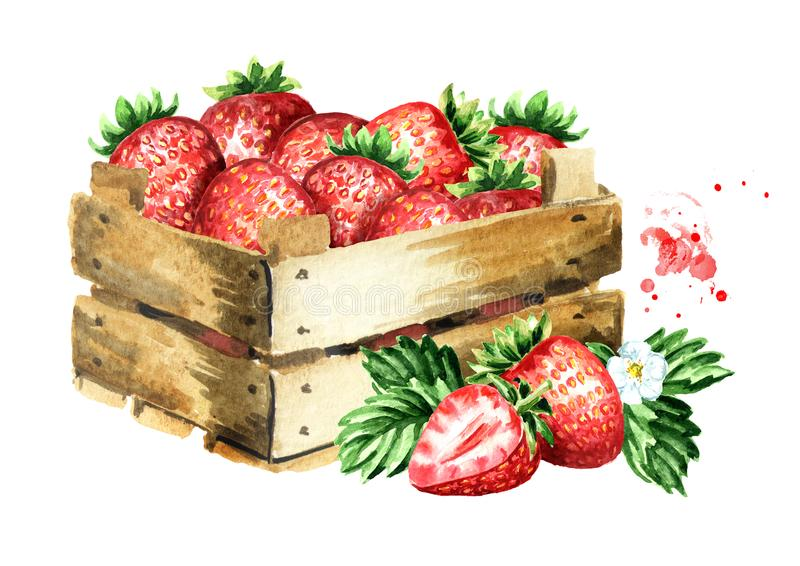 Box with ripe strawberries. Watercolor hand drawn illustration, isolated on white background, royalty free illustration