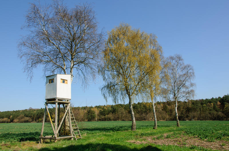 Download Box Stand At A Row Of Birches Stock Image - Image: 30315787