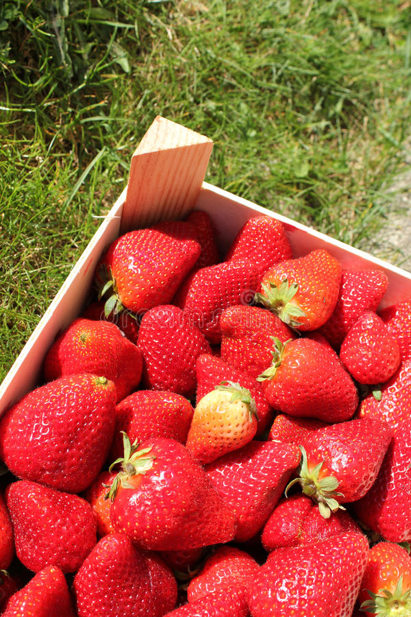 Download Box Of Strawberries Royalty Free Stock Photos - Image: 19216928