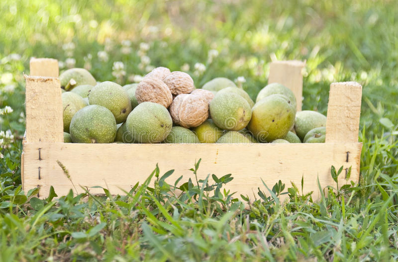 Download Box of walnuts stock image. Image of natural, green, autumn - 26653119