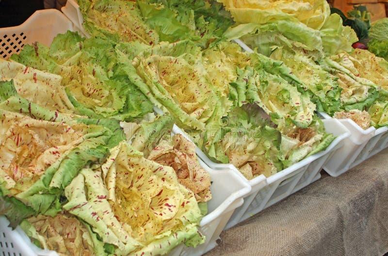 Boxas med säsongsbetonade grönsaker på rea från grönsakshandlare av royaltyfri bild