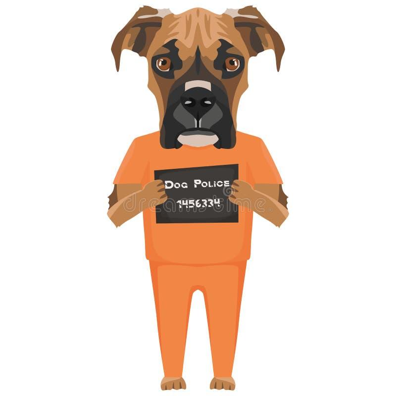 Boxeador del perro de la ropa de la prisi?n del Mugshot ilustración del vector