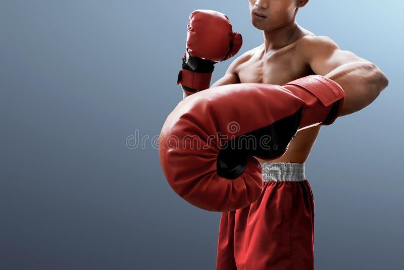 Boxeador muscular fuerte en fondo gris fotos de archivo
