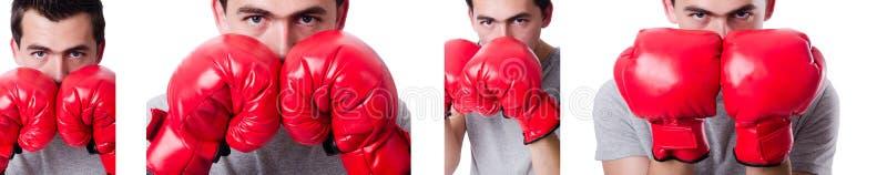 Boxeador que se prepara para el torneo aislado en blanco imágenes de archivo libres de regalías