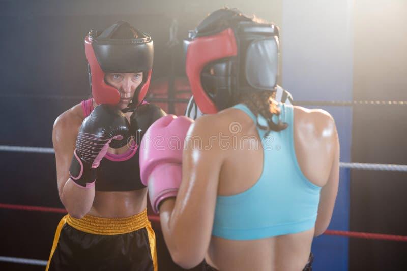 Boxeadores de sexo femenino jovenes que llevan la ropa de deportes protectora fotografía de archivo