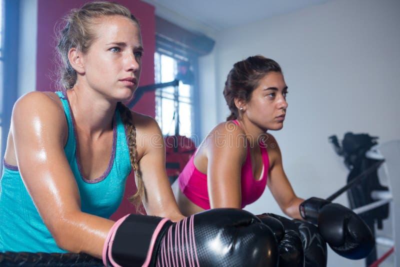 Boxeadores de sexo femenino jovenes que se inclinan en cuerda mientras que mira lejos imagen de archivo libre de regalías