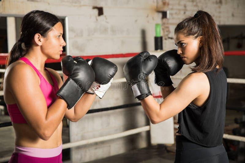 Boxeadores de sexo femenino listos para luchar foto de archivo