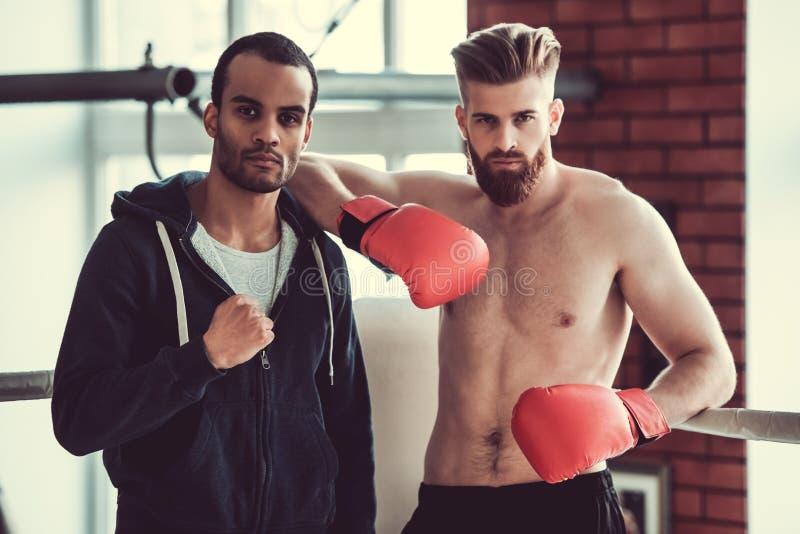 Boxeadores jovenes hermosos foto de archivo libre de regalías