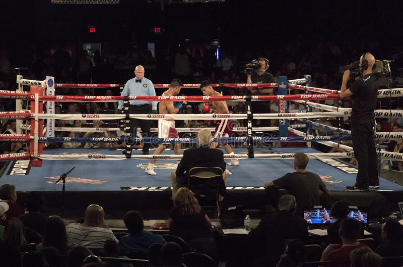 Boxeadores profesionales en Matchup foto de archivo