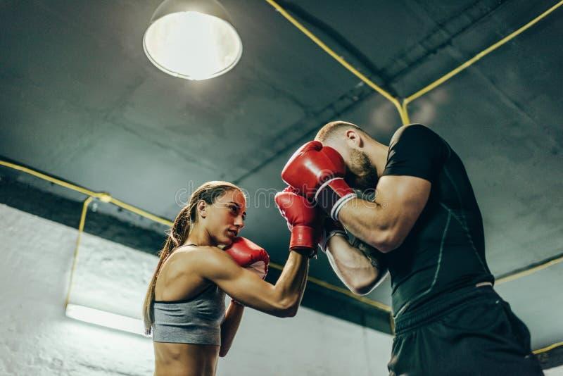Boxeadores que entrenan en el ring de boxeo fotografía de archivo