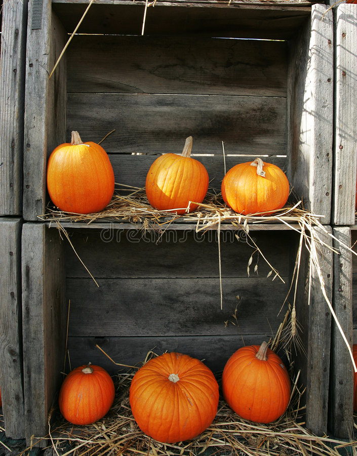 Boxed Pumpkins stock photography