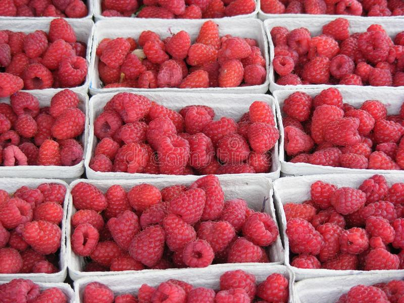 Download Boxed raspberries stock photo. Image of cultivation, goods - 10290710