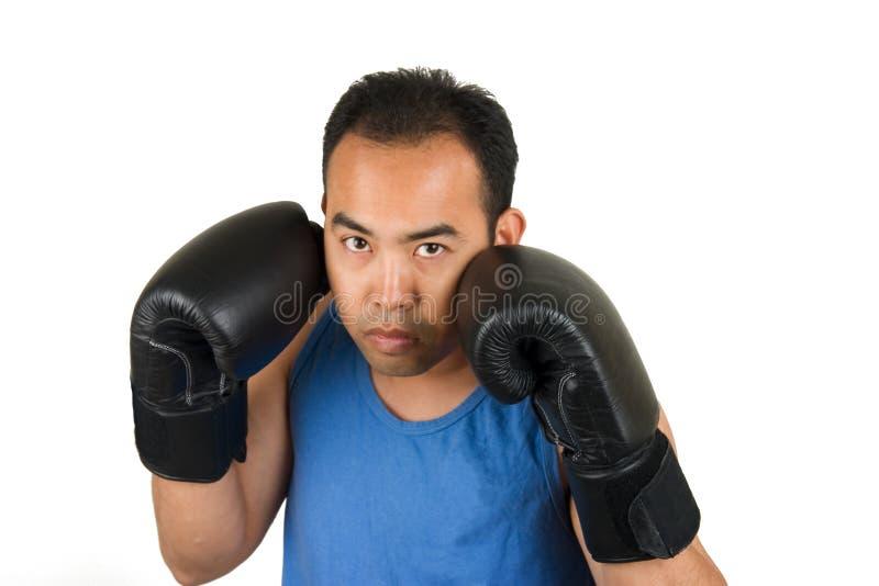 boxer 1 zdjęcie royalty free