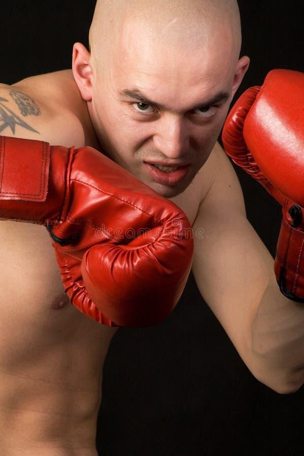boxer zdjęcie stock