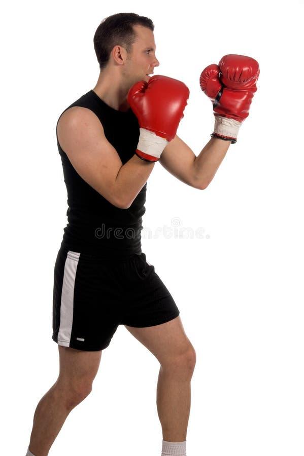 boxer zdjęcia royalty free