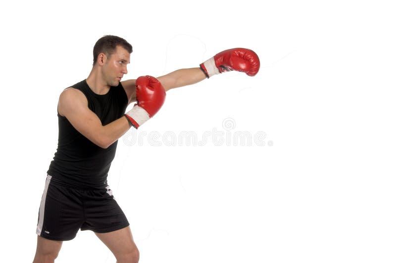boxer obrazy royalty free