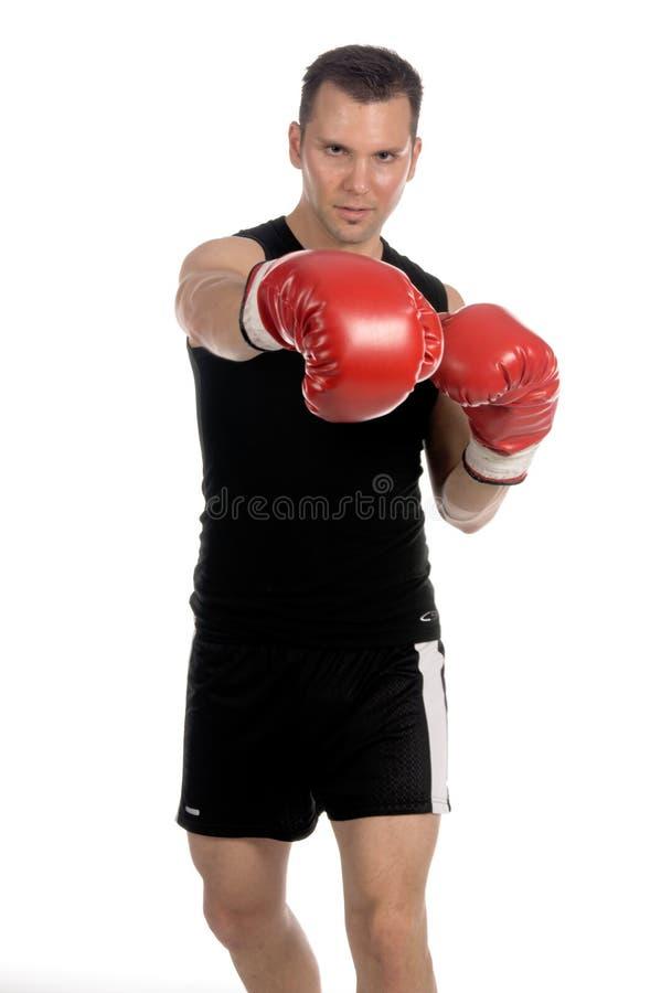 boxer fotografia stock