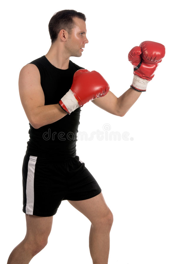 boxer zdjęcie royalty free