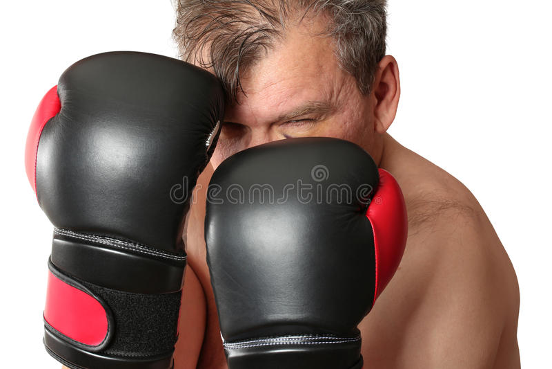 boxer stock foto