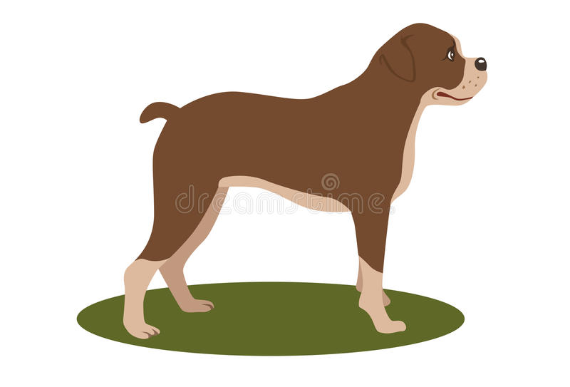 Boxer. The Boxer is a breed of stocky, medium-sized, short-haired dogs developed in Germany vector illustration