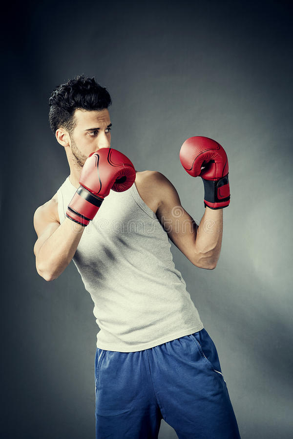 Boxer in defensive position stock image