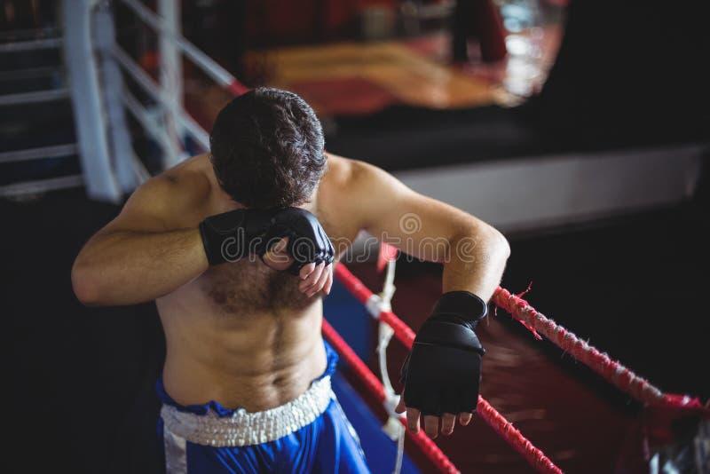 Boxer, der nach Niederlage aufwirft lizenzfreie stockbilder