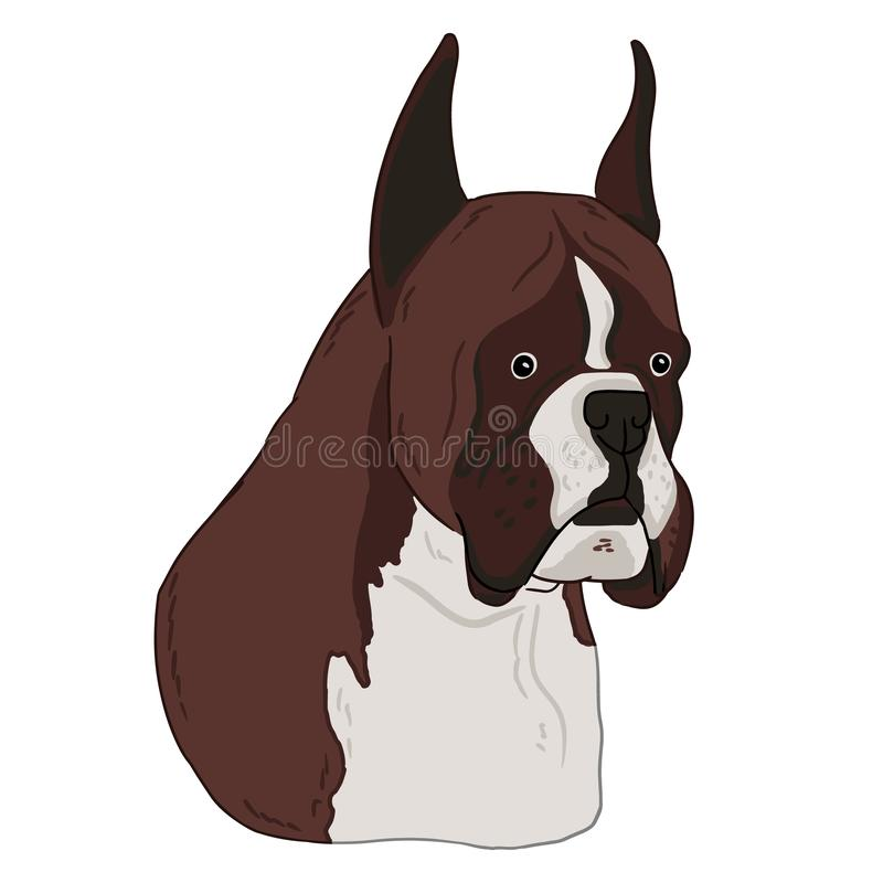 Boxer dog animal cute face. Vector illustration of cartoon simple dog portrait on white background. Animal art drawn by free hand royalty free illustration