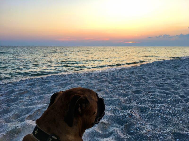 Dog on the sandy beach at sunset stock photo