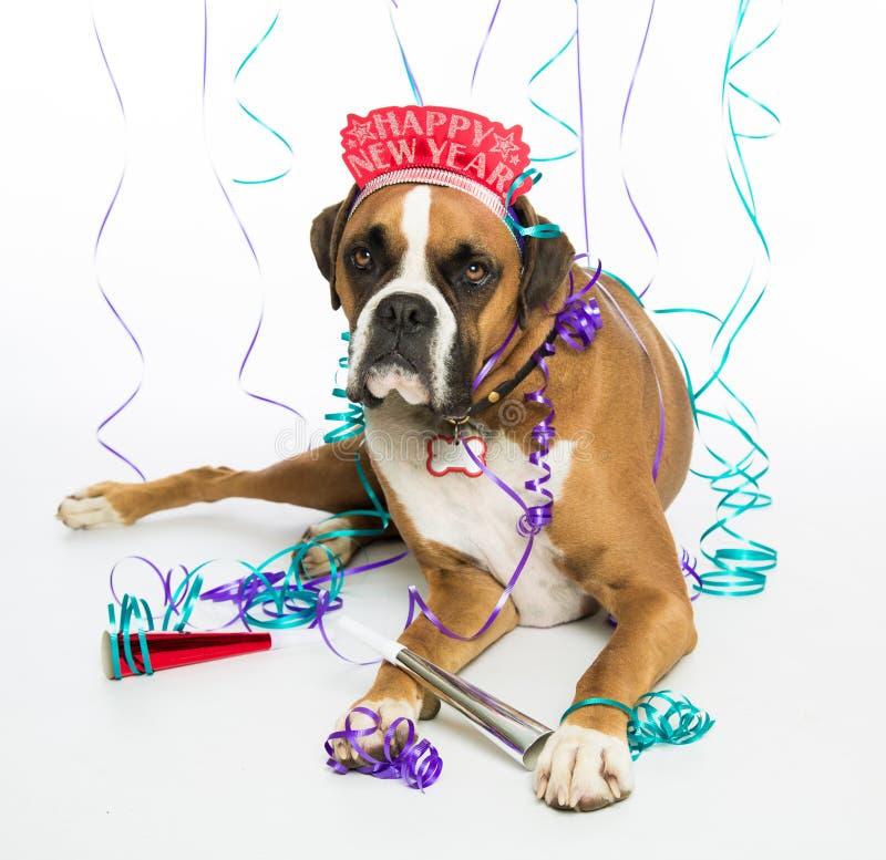 Boxer Dog Happy New Year. Celebrations stock photo