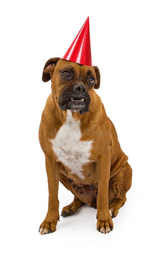 Boxer-Hund, der einen Geburtstaghut trägt stockbild