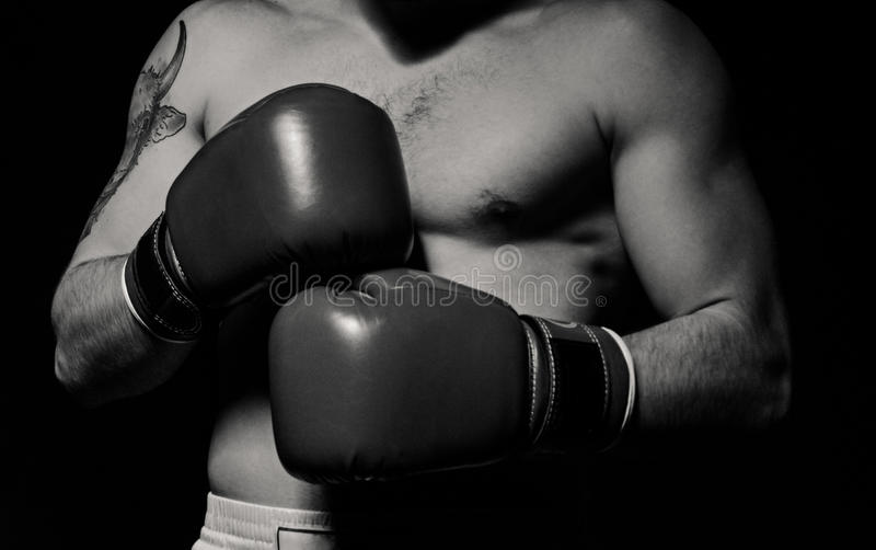 Boxer man putting on boxing gloves royalty free stock images