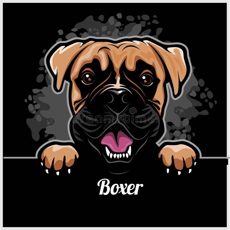 Boxer - Peeking Dogs - breed face head isolated on black vector illustration